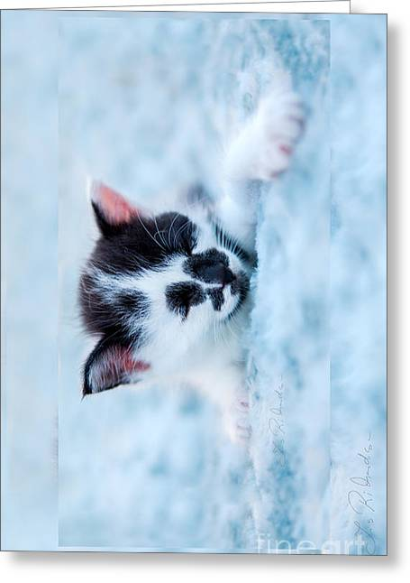 Cute Kitten Greeting Cards - Sleeping black and white kitten on blue plush bed larger Iphone Case Greeting Card by Iris Richardson