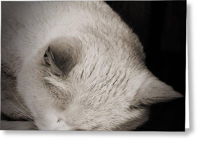 Animals Sleeping Greeting Cards - Sleeping Cat Greeting Card by Martin Newman