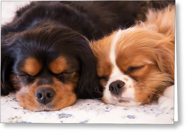 Dogie Greeting Cards - Sleeping Cavalier King Charles Spaniels Greeting Card by Daphne Sampson