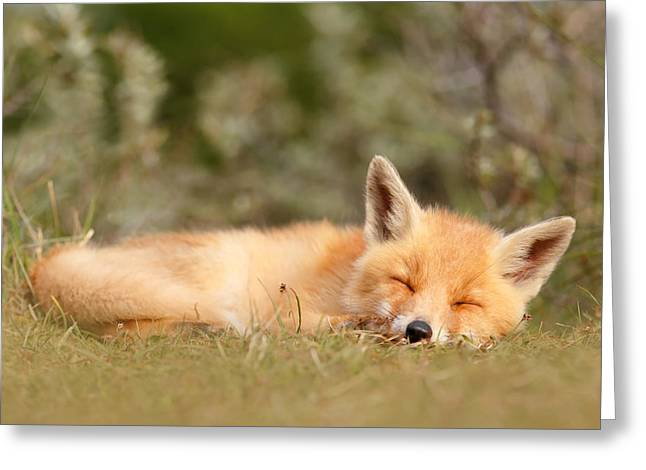 Suckling Greeting Cards - Sleeping Cuty _ Red Fox Kit Greeting Card by Roeselien Raimond