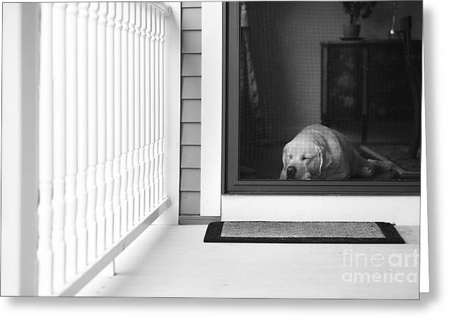 Screen Door Greeting Cards - Sleeping dog Greeting Card by Diane Diederich