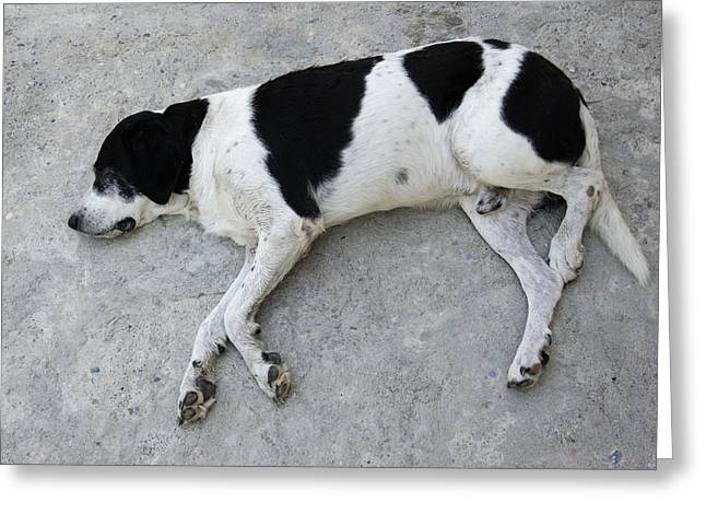 Pause Greeting Cards - Sleeping dog lying on the ground Greeting Card by Matthias Hauser