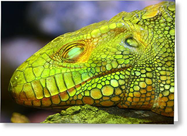 Sleeping Face Greeting Cards - Sleeping dragon Greeting Card by David Lee Thompson