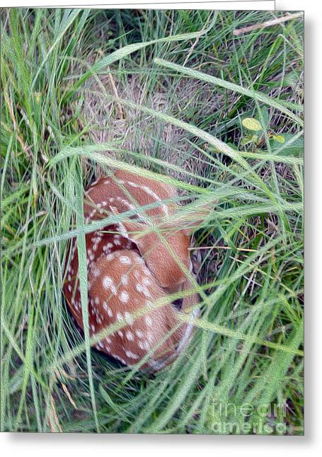 Fawn Mixed Media Greeting Cards - Sleeping Fawn 2 Greeting Card by Jon Neidert
