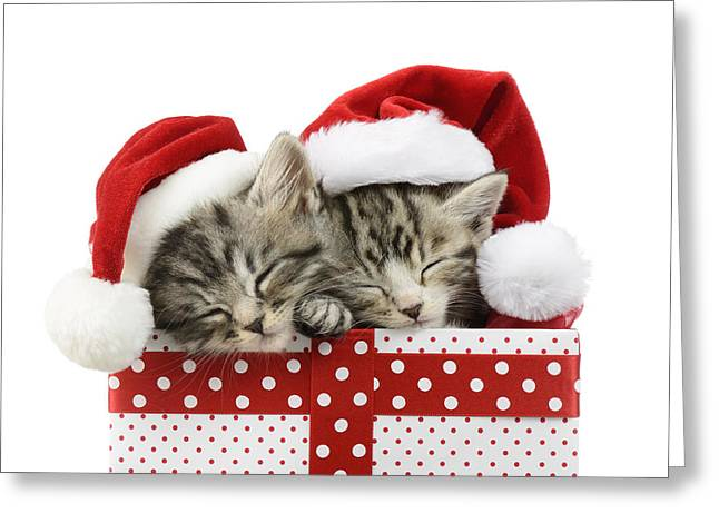 Christmas Eve Greeting Cards - Sleeping Kittens In Presents Greeting Card by Greg Cuddiford