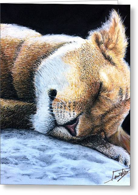 Marcin Greeting Cards - Sleeping Liones Greeting Card by Marcin and Dawid Witukiewicz