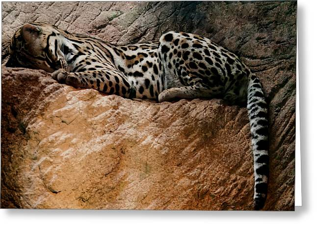 Animal Pics Greeting Cards - Sleeping Ocelot Greeting Card by Chris Flees