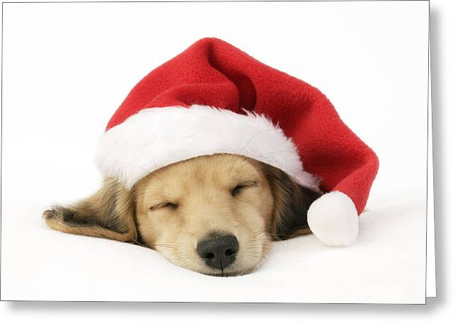 Christmas Eve Greeting Cards - Sleeping Santa Puppy Greeting Card by Greg Cuddiford