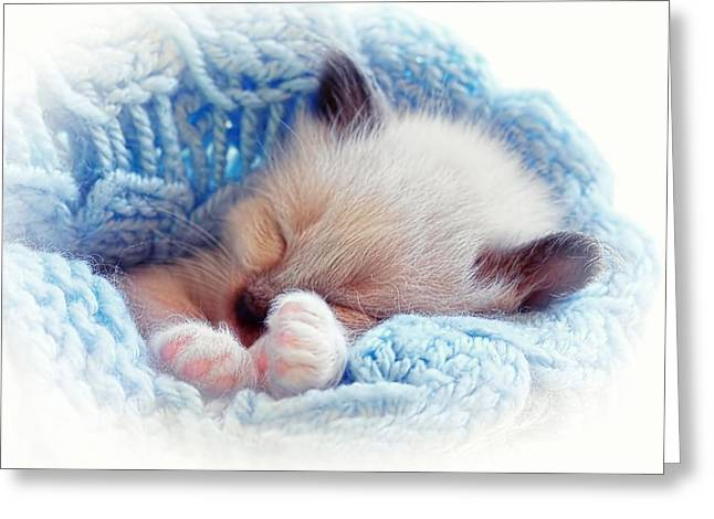 Kitten Pastel Kitten Greeting Cards - Sleeping Siamese Kitten Greeting Card by Tracie Kaska