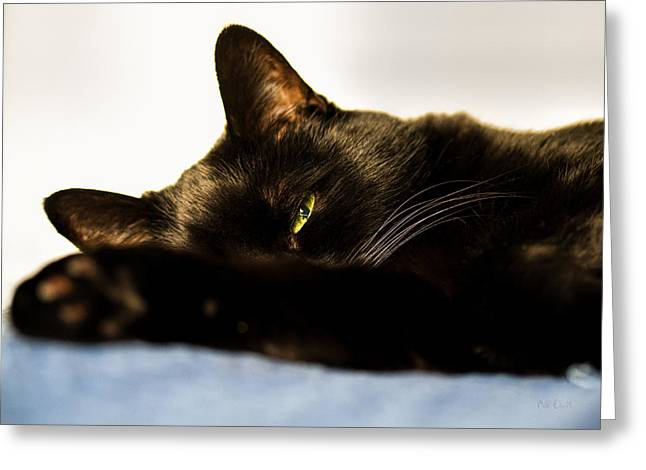 Cat Photographs Greeting Cards - Sleeping with one eye open Greeting Card by Bob Orsillo