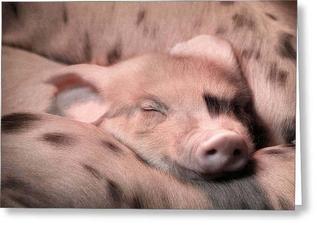 Piglets Greeting Cards - Sleepy Baby Pig Greeting Card by Lori Deiter