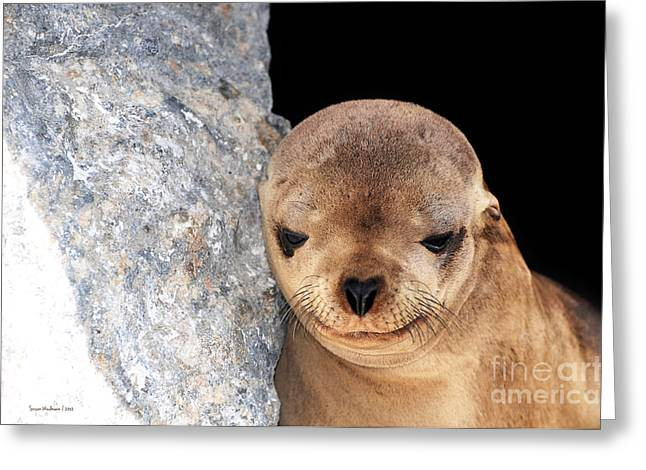 Susan Wiedmann Greeting Cards - Sleepy Baby Sea Lion Greeting Card by Susan Wiedmann