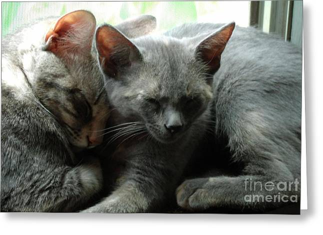 Pictures Of Cats Greeting Cards - Sleepy Greeting Card by Donda Todd