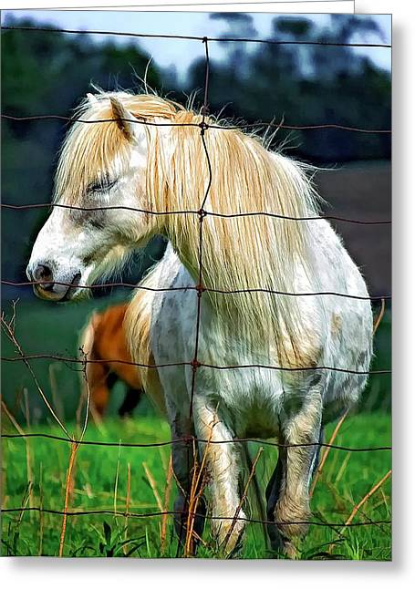 Equestrian Prints Photographs Greeting Cards - Sleepy Girl Greeting Card by Steve Harrington