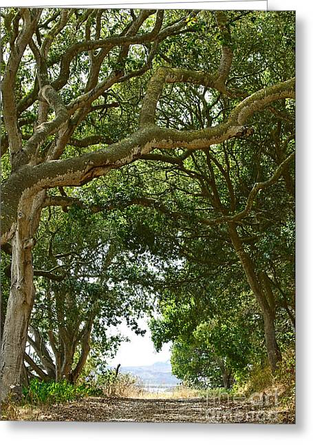 Sloughs Greeting Cards - Sleepy Hollow - Hiking trail along Elkhorn Slough a tidal estuary. Greeting Card by Jamie Pham