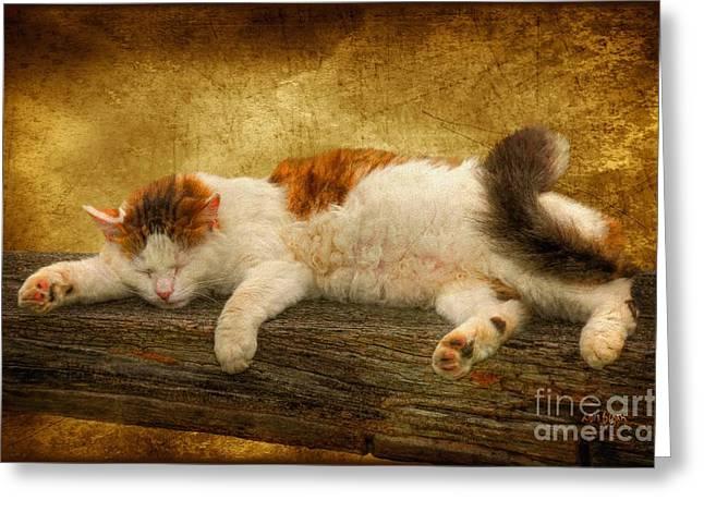 Sleeping Cats Greeting Cards - Sleepy Kitty Greeting Card by Lois Bryan