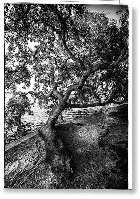 Sea Wall Greeting Cards - Sleepy Oak Greeting Card by Marvin Spates