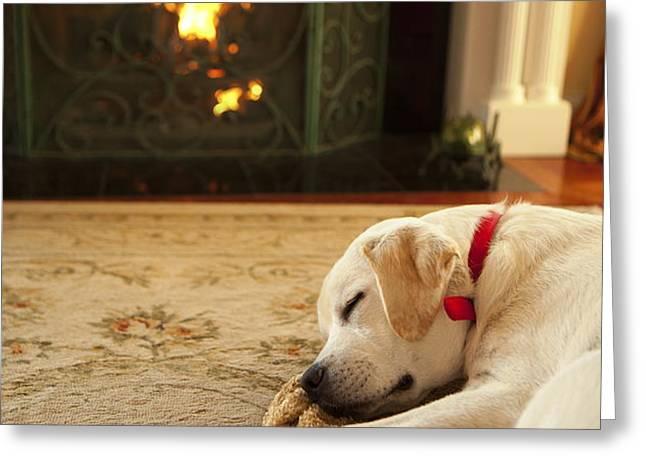 Sleepy Puppy Greeting Card by Diane Diederich