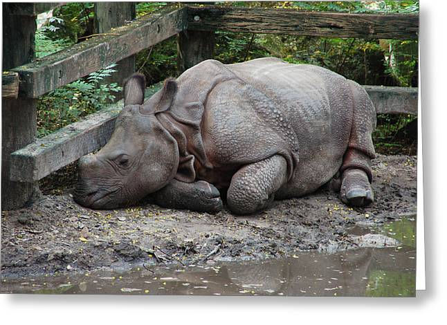 Rhinoceros Greeting Cards - Sleepy Rhino Greeting Card by Aimee L Maher Photography and Art