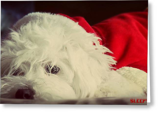 Sleepy Maltese Greeting Cards - Sleepy Santa Greeting Card by Melanie Lankford Photography
