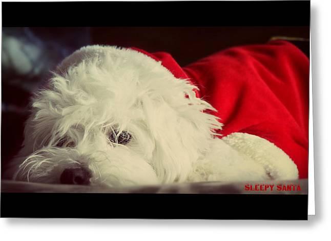 Sleepy Maltese Greeting Cards - Sleepy Santa Greeting Card by Melanie Lankford Photography