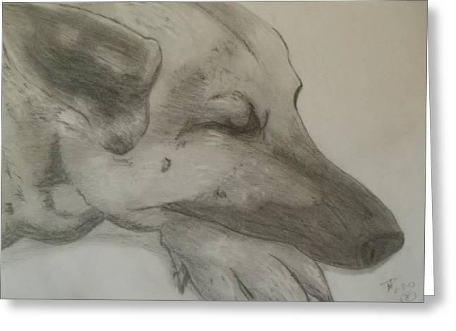 Puppies Drawings Greeting Cards - Sleepy Shepherd Greeting Card by Thomasina Durkay