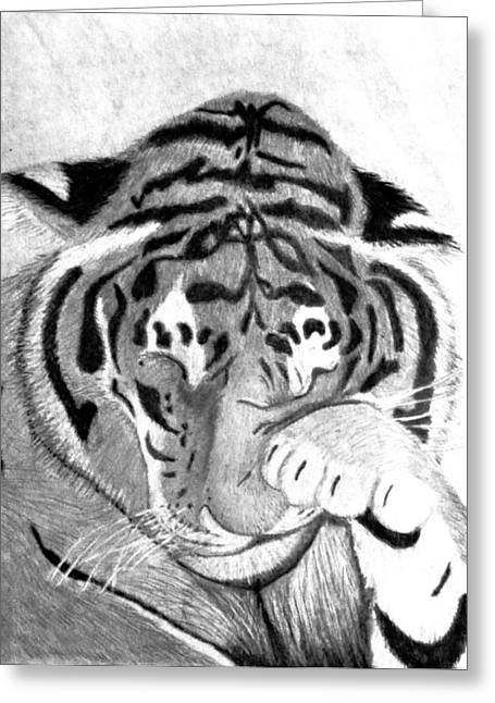 Michelle Drawings Greeting Cards - Sleepy Tiger Greeting Card by Michelle McPhillips