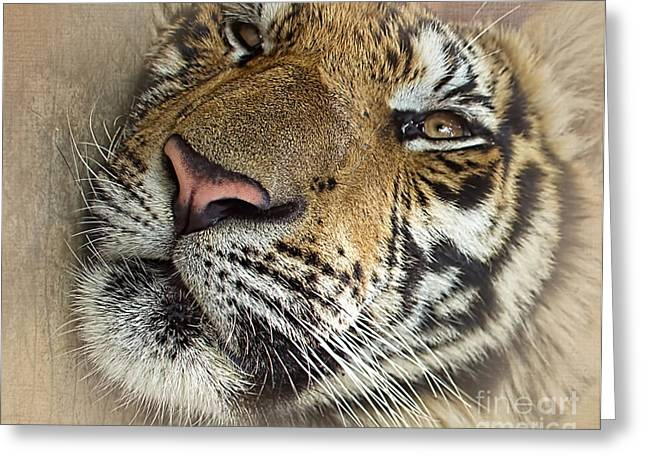 Large Cats Greeting Cards - Sleepy Tiger Portrait Greeting Card by Kaye Menner