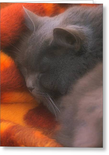 Pussy Greeting Cards - Sleepy Time Greeting Card by Joann Vitali