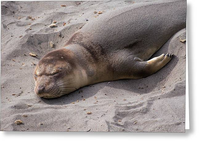 Elephant Seals Greeting Cards - Sleepy Greeting Card by Ursula Klepper