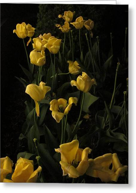 Guy Ricketts Photography Greeting Cards - Sleepy Yellow Tulips of the Silent Nocturne Greeting Card by Guy Ricketts