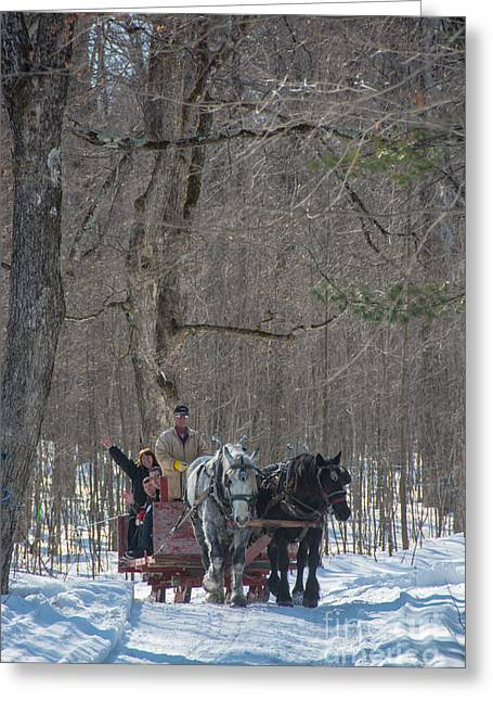 Big Chill Greeting Cards - Sleigh Ride through the Maples Greeting Card by Cheryl Baxter
