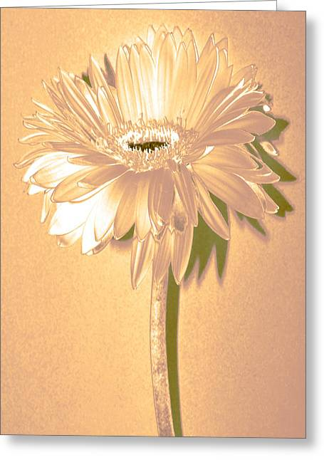 Sunburst Floral Still Life Greeting Cards - Slice Of Lime Zinnia Greeting Card by Sherry Allen