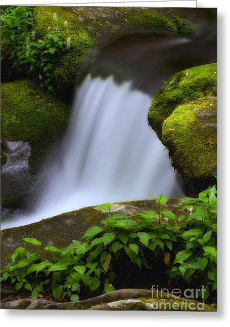 Moss Green Greeting Cards - Slice of the River Greeting Card by Todd Bielby