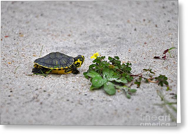 Slider Greeting Cards - Slider and Sorrel in Sand Greeting Card by Al Powell Photography USA