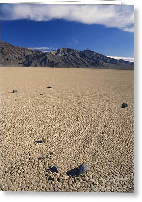 Moving Earth Greeting Cards - Sliding Rocks On Racetrack Playa Greeting Card by Mark Newman