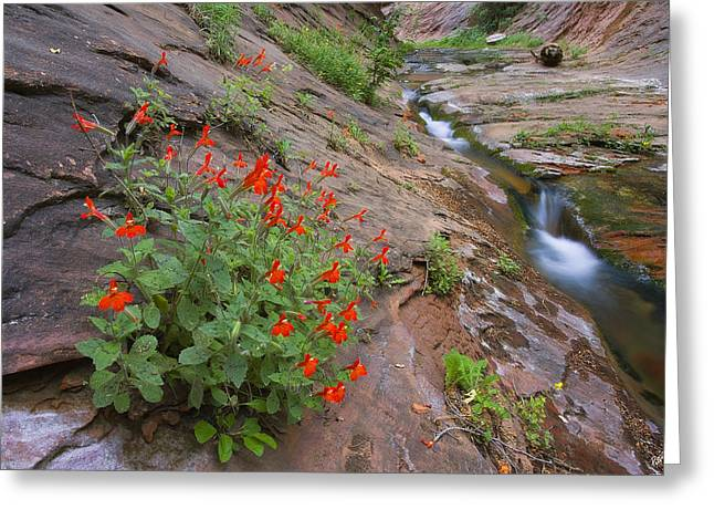 West Fork Greeting Cards - Slippery Slope Greeting Card by Peter Coskun