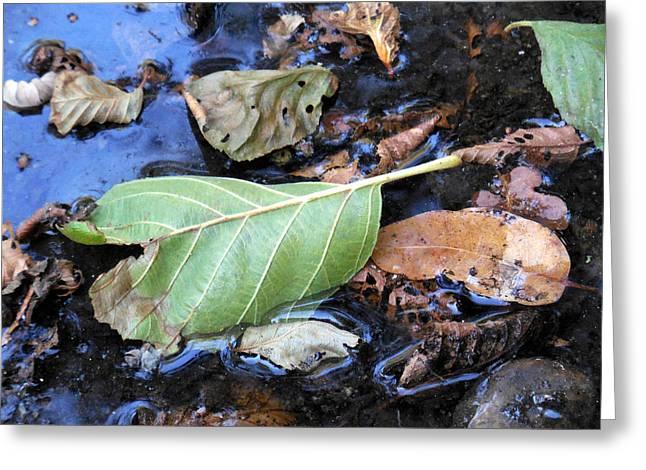 Tree Leaf On Water Greeting Cards - Slit Leaf Greeting Card by Chris Gudger