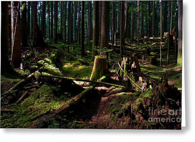 North Vancouver Photographs Greeting Cards - Sliver Of Light Greeting Card by Terry Elniski