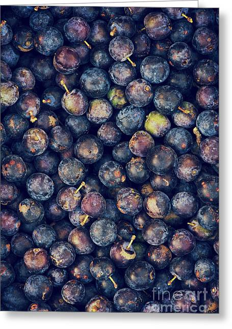 Loom Greeting Cards - Sloes Greeting Card by Tim Gainey