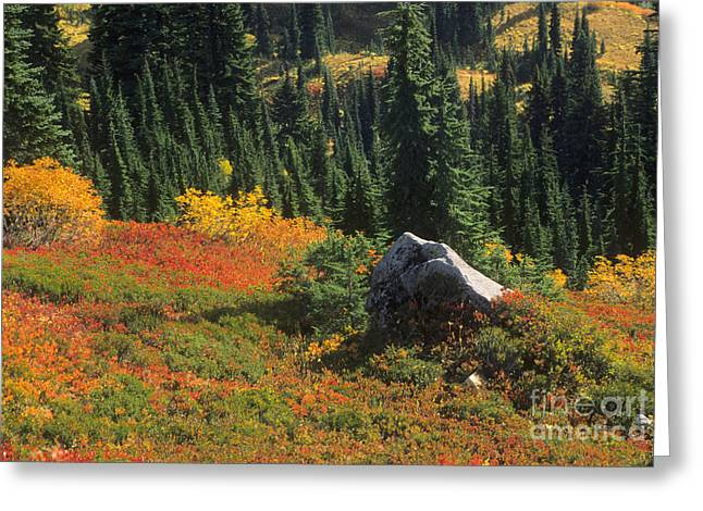 Rock Slope Greeting Cards - Slopes Of Mt. Rainier Greeting Card by Richard and Ellen Thane