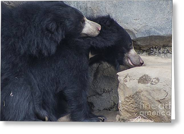 Sloth Greeting Cards - Sloth Bear Greeting Card by Twenty Two North Photography