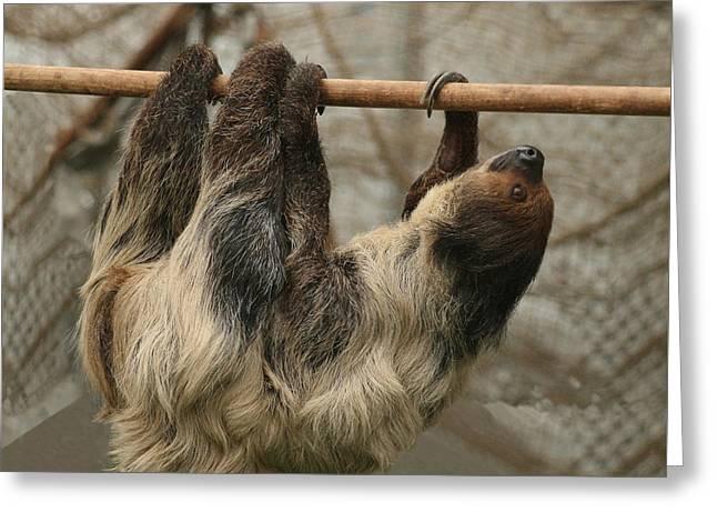 Sloth Greeting Cards - Sloth Greeting Card by Ellen Henneke