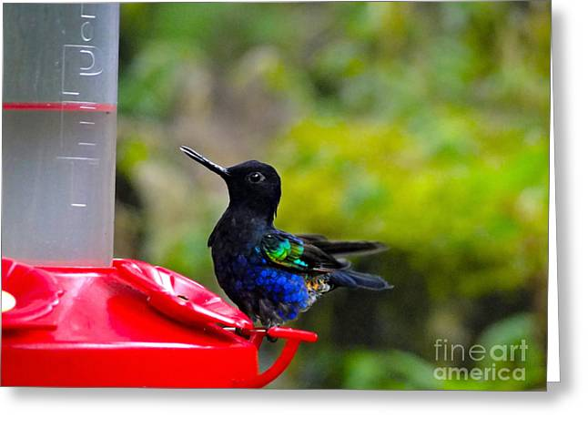 Hovering Greeting Cards - Slurping The Nectar Greeting Card by Al Bourassa