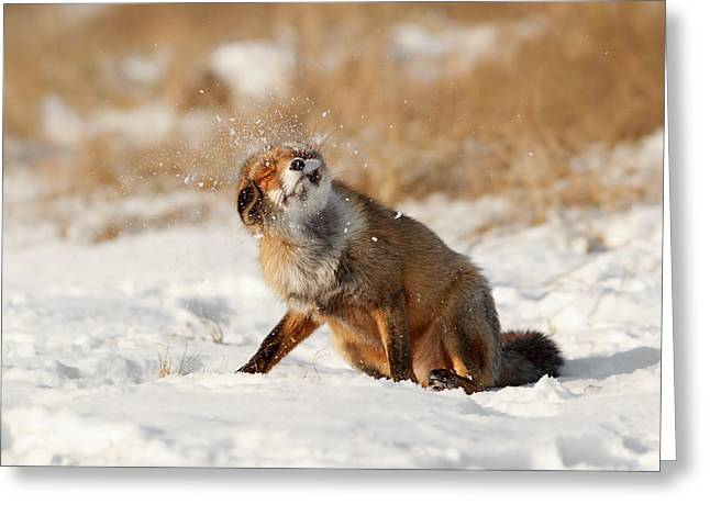Snow-coated Greeting Cards - Slush Puppy Red Fox in The SNow Greeting Card by Roeselien Raimond
