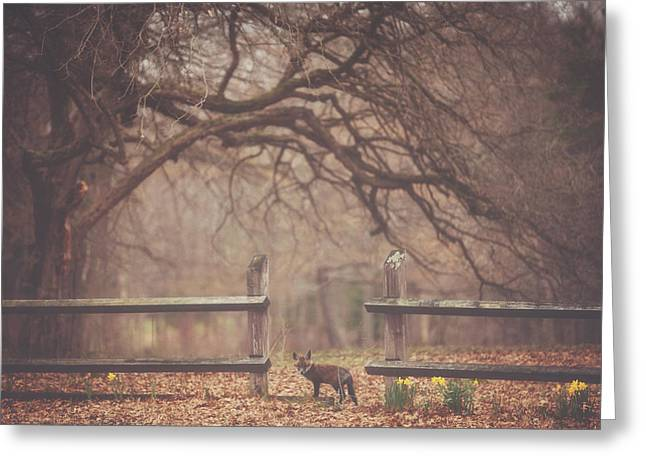 Autumn Landscape Photographs Greeting Cards - Sly Guy Greeting Card by Carrie Ann Grippo-Pike