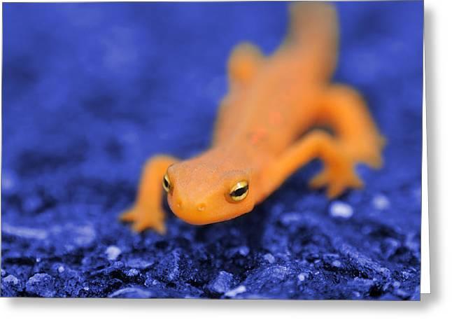 Salamander Greeting Cards - Sly Salamander Greeting Card by Luke Moore