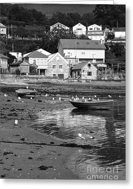 Seagull Reflection Greeting Cards - Small boats and seagulls in Galicia BW Greeting Card by RicardMN Photography