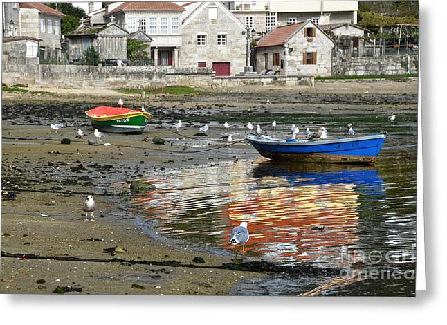 Seagull Reflection Greeting Cards - Small boats and seagulls in Galicia Greeting Card by RicardMN Photography