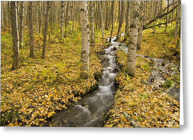 Beautiful Creek Greeting Cards - Small Creek Flows Through Autumn Leaf Greeting Card by Greg Martin